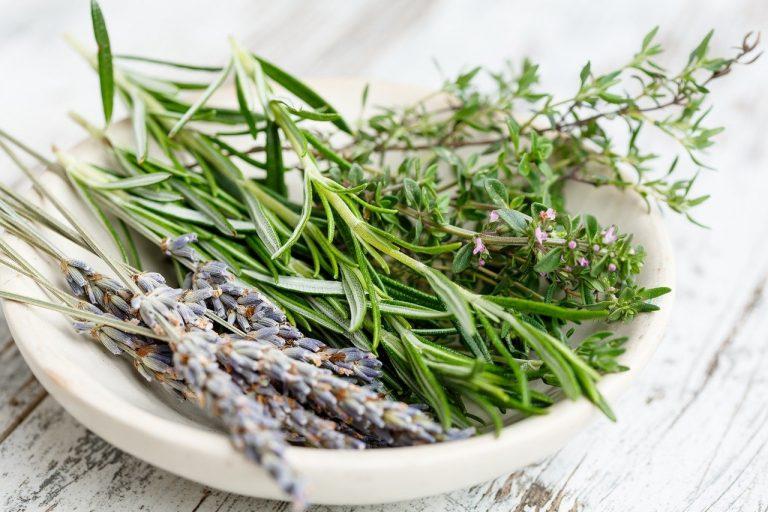 Les 5 herbes de provence pour l'hiver
